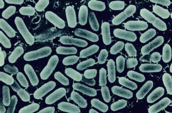 New genomics research project to eliminate Listeria from food supply